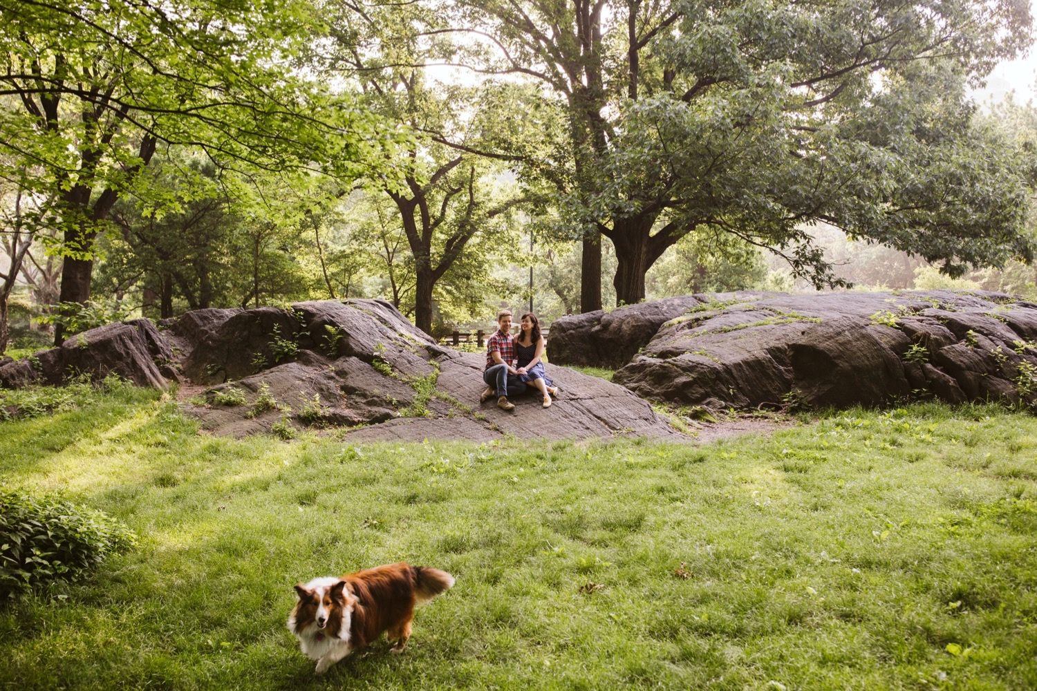 a wide shot of an engaged couple sitting closely on a rock in central park, a cute border collie is running by in the front of the photo